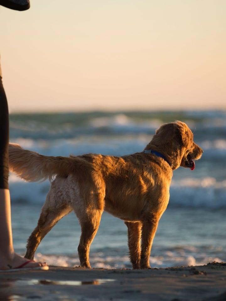 Dogs and animal beach Yyteri